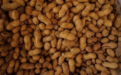 Peanut Industry in Africa